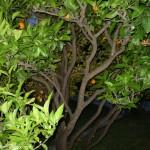 Naš vrt po noći